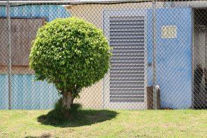גיזום עצים ברמלה