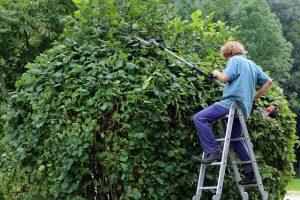 גיזום וכריתת עצים בשרון