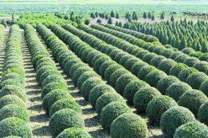 גיזום עצים מחיר