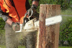 כריתה ועקירת עצים בשטח פרטי