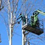 כריתת עצים ברמת השרון