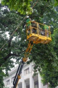 גיזום עצים גבוהים מקצוענים עם כל האישורים