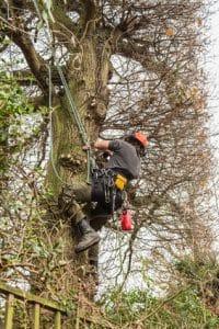 כריתת עץ בחצר פרטית על ידי אנשי מקצוע