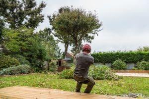 כריתת עץ בשטח פרטי על ידי מומחה