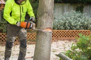 כריתת עץ בשטח פרטי