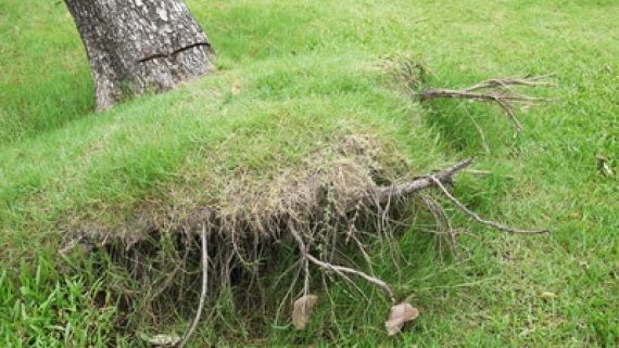 העתקת עצים