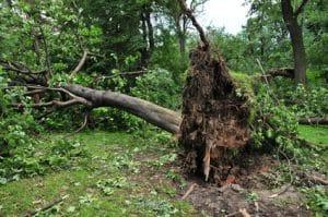 עקירת עצים בשטח פרטי