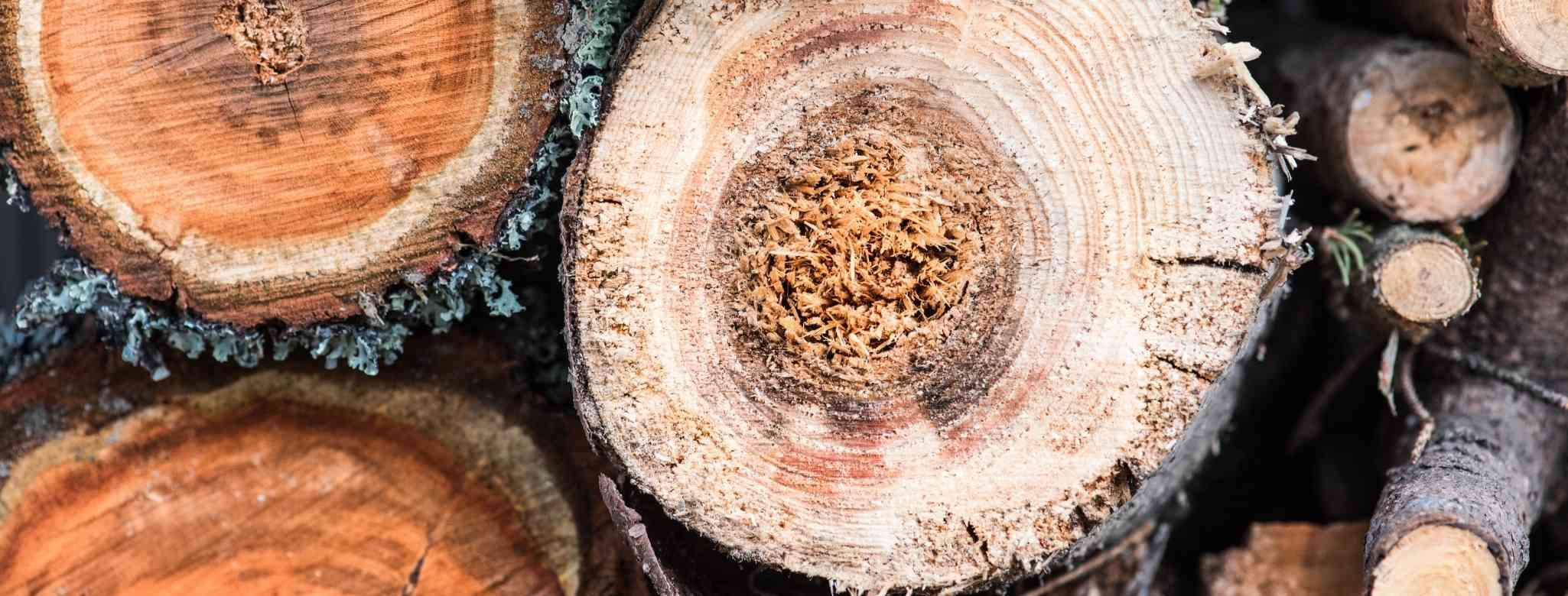 כרית עצים במקום גיזום